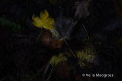 Autumn - The sound of colours - LXXI