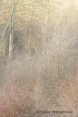 Among trees - XXIII