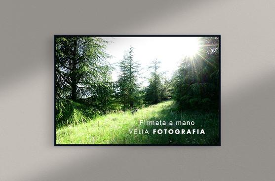 velia_fotografia_among_trees_spring.jpg