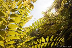 Autumn - The sound of colours - LV