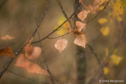 Autumn - The sound of colours - XII