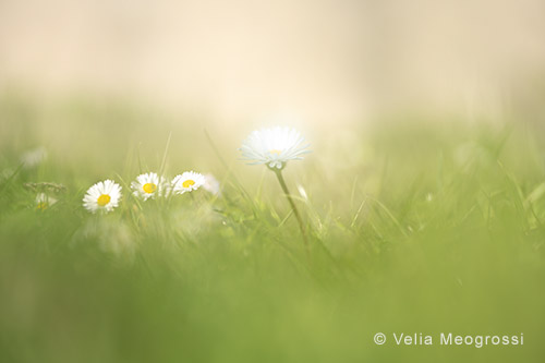 Spring fields - X