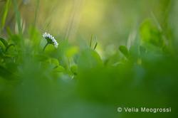 Spring fields - I