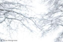 Winter---The-sound-of-colours---XXVI