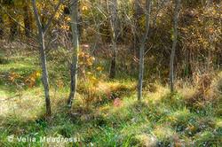 Sunny days of Autumn