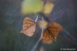 Autumn - The sound of colours - XVI