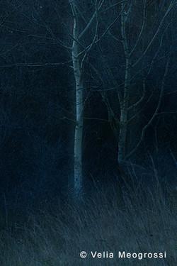 Among trees - XII