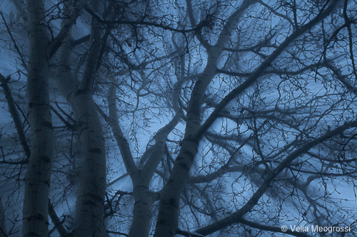 Winter branches - II
