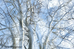 Winter branches - XII (February days)