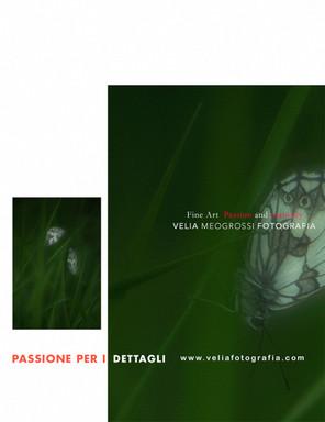 print_butterfly_1.jpg