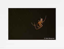 Spider - II