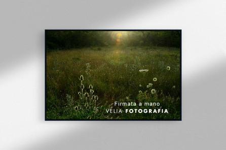 summer_field.jpg