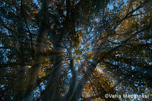 Autumn branches - IV (Last rays of sun)