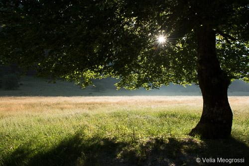 Seasons - IV - Light and shadow
