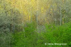 Among trees - XXXIV