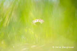 Spring fields - VIII