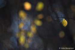 Autumn - The sound of colours - XVIII