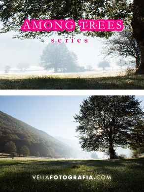 Among_trees_n_green_9.jpg