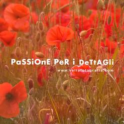 velia_fotografia_print_poppies.jpg
