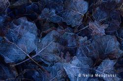 Autumn - The sound of colours - LXXX