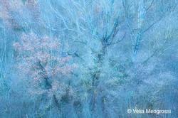 Autumn - The sound of colours - LIV (lat