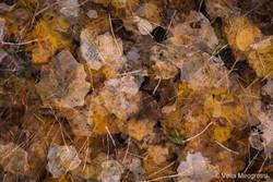 Autumn - The sound of colours - XLII