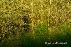 Among trees - XXXIII