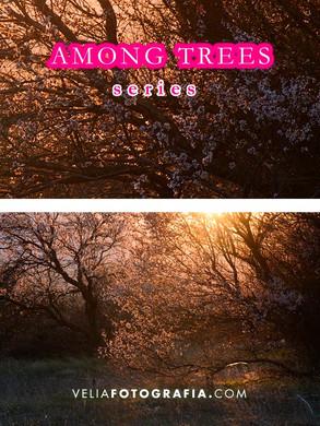 Among_trees_n_sunset.jpg