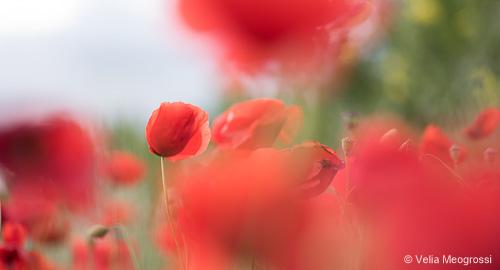 Red fields - V