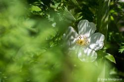 Spark among the bush