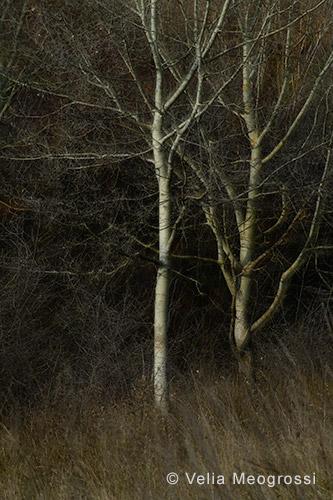Among trees - XIV