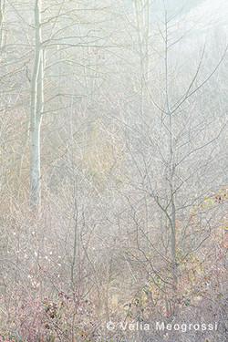 Among trees - XXII
