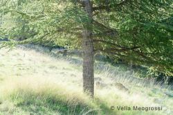 Among trees - XXVIII