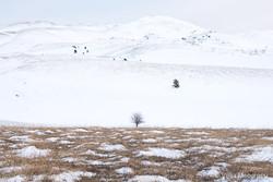 Winter days - IV