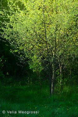 Among trees - XXXVI