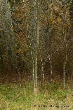 Among trees - XI