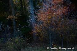 Among trees - VI