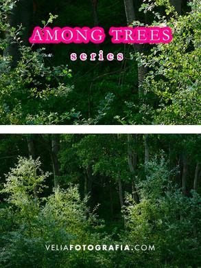 Among_trees_III.jpg