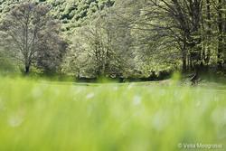 Seasons - II - Magical woods - II