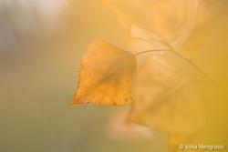 Autumn - The sound of colours . XVII