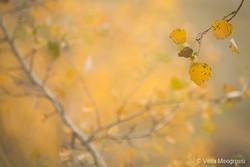 Autumn - The sound of colours - XXIII