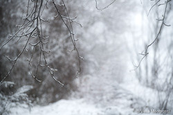 Winter - The sound of colours - V