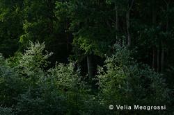 Among trees - XXXVIII