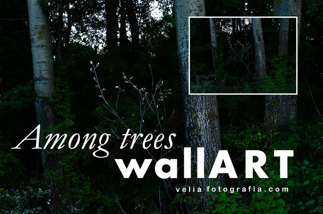 velia_fotografia_among_trees.jpg