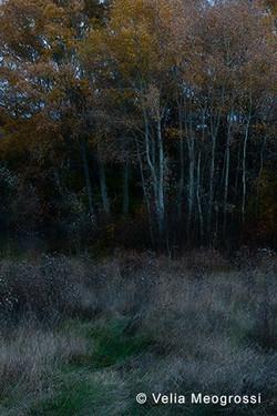 Among trees - IX
