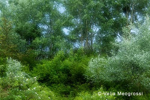 Among trees - II