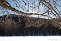 Seasons - I - Winter branches