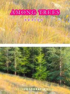 Among_trees_II.jpg