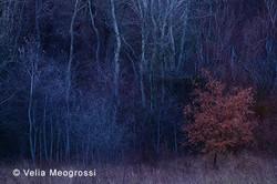 Among trees - X