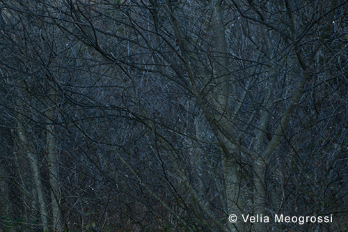 Among trees - XV